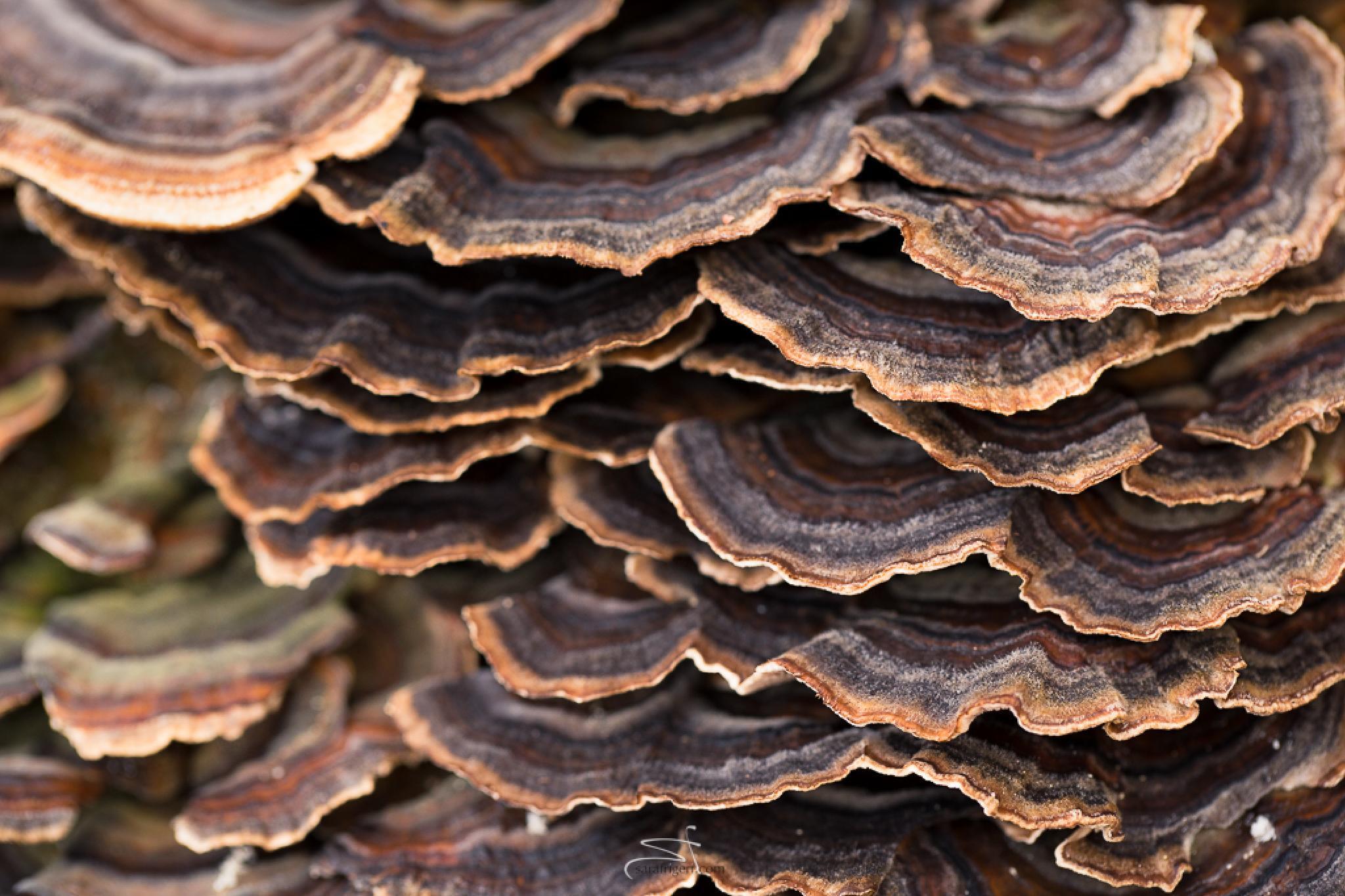 Mushrooms by sara frigeri
