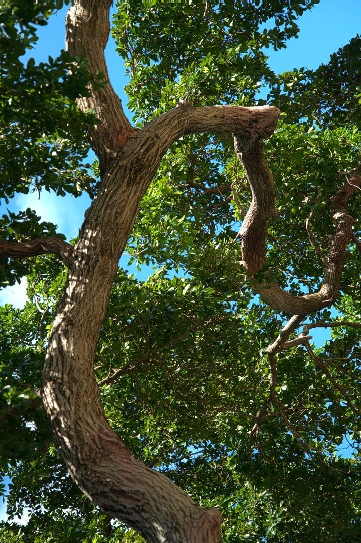 Miami Tree by Edu Vergara