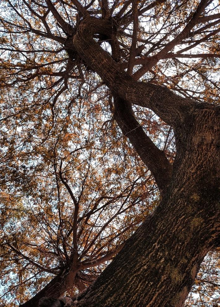 Autumn by Edu Vergara