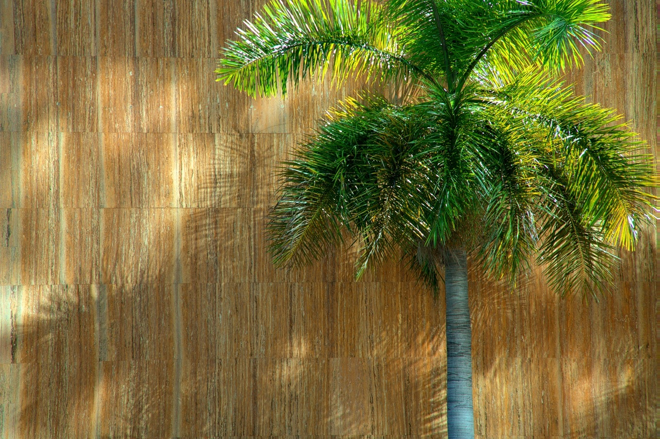 Palm Portrait by Edu Vergara