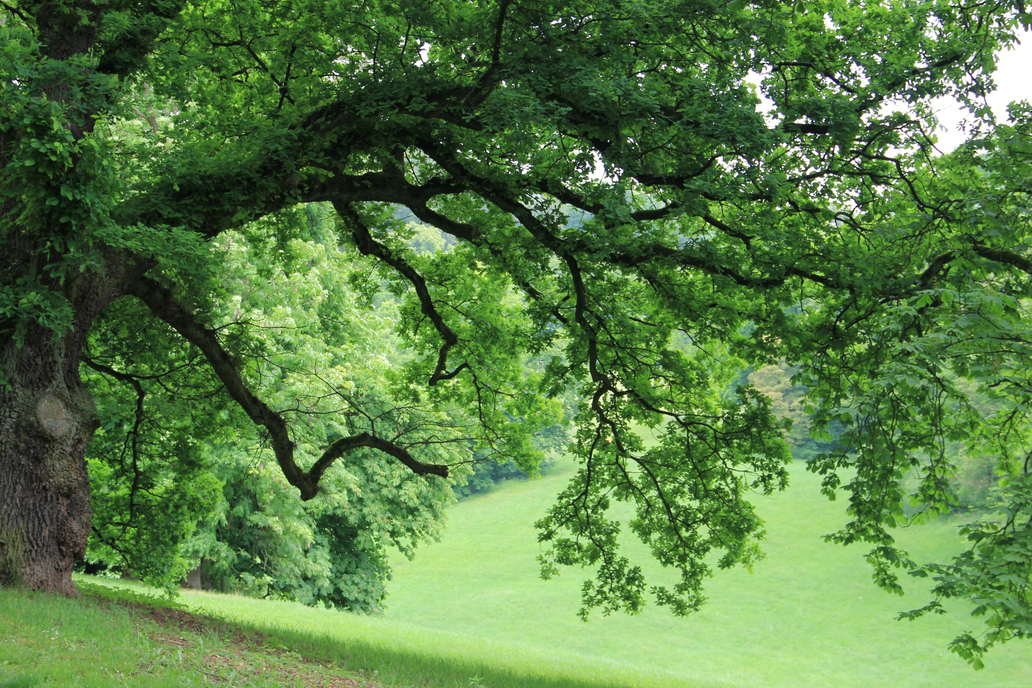 Photo in Nature #germany #tree