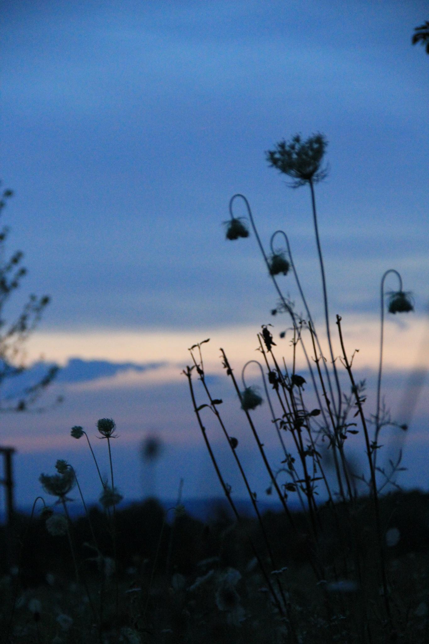 flowers at night by hamaro