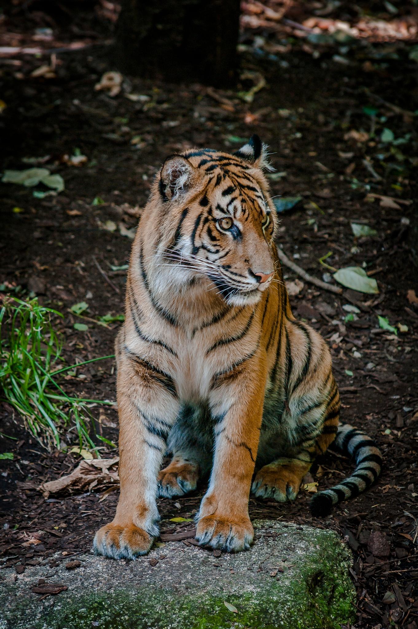 The Sumatran 5 by gerardrotse