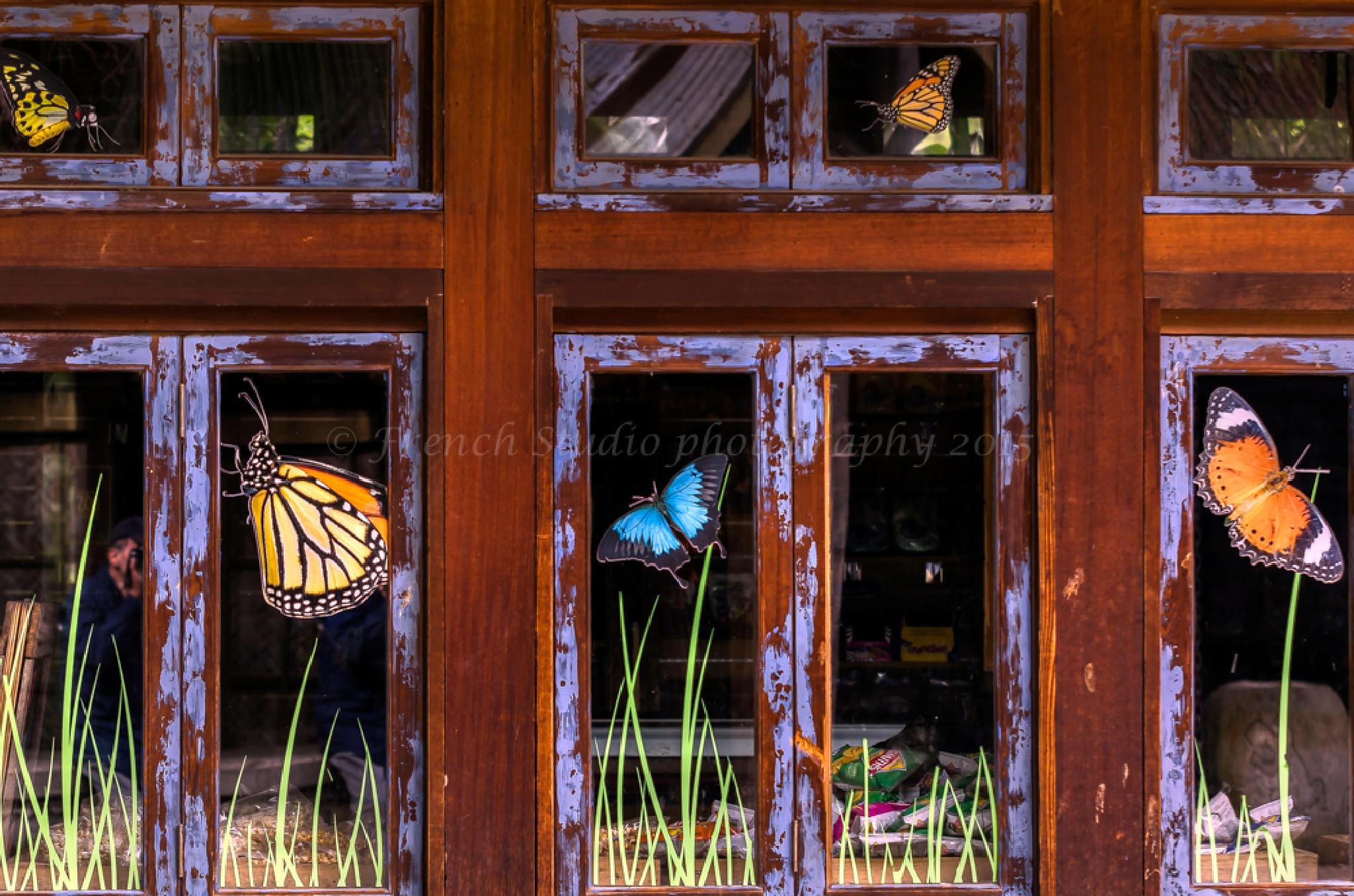 Magic windows by gerardrotse