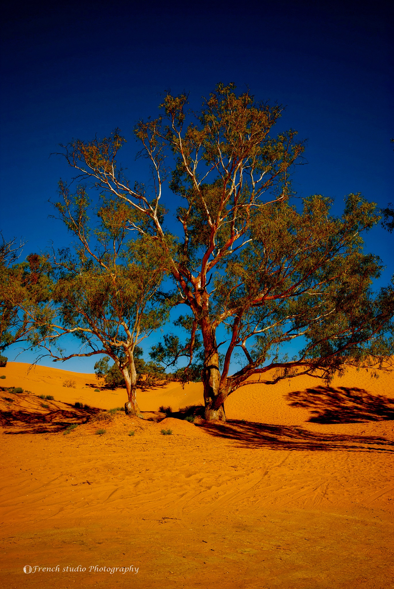 The red dunes by gerardrotse