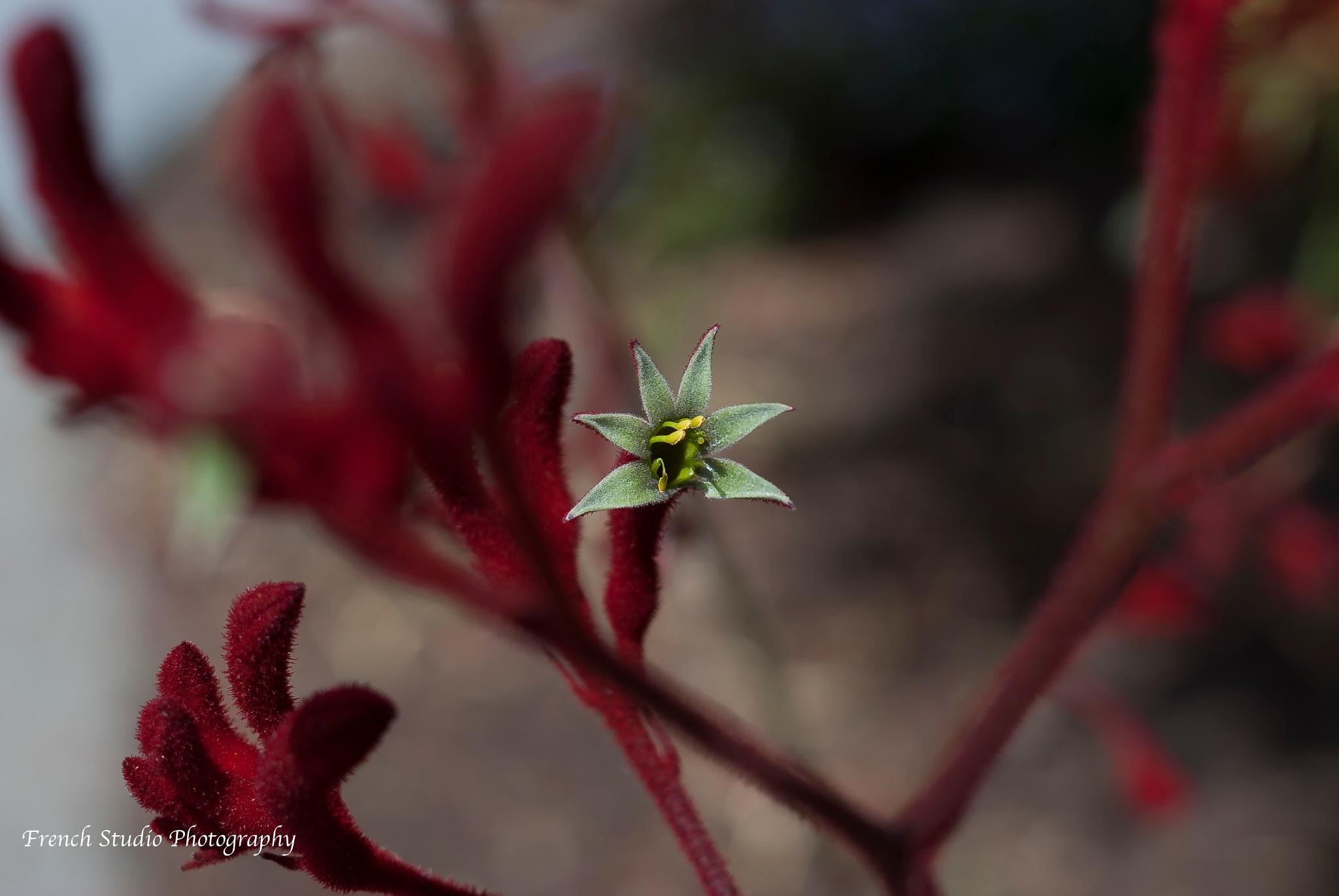 New flower bud by gerardrotse