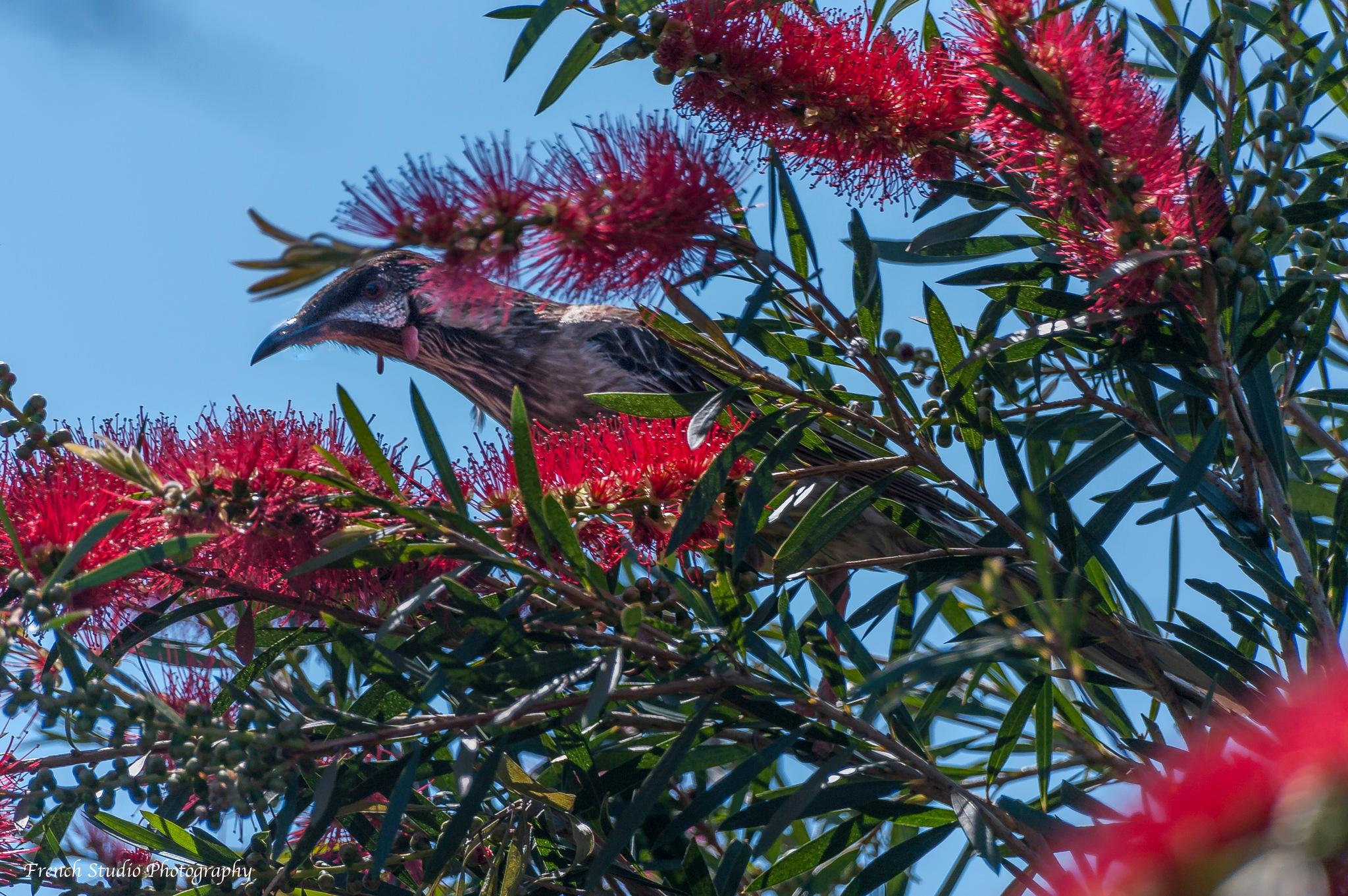 The bird by gerardrotse