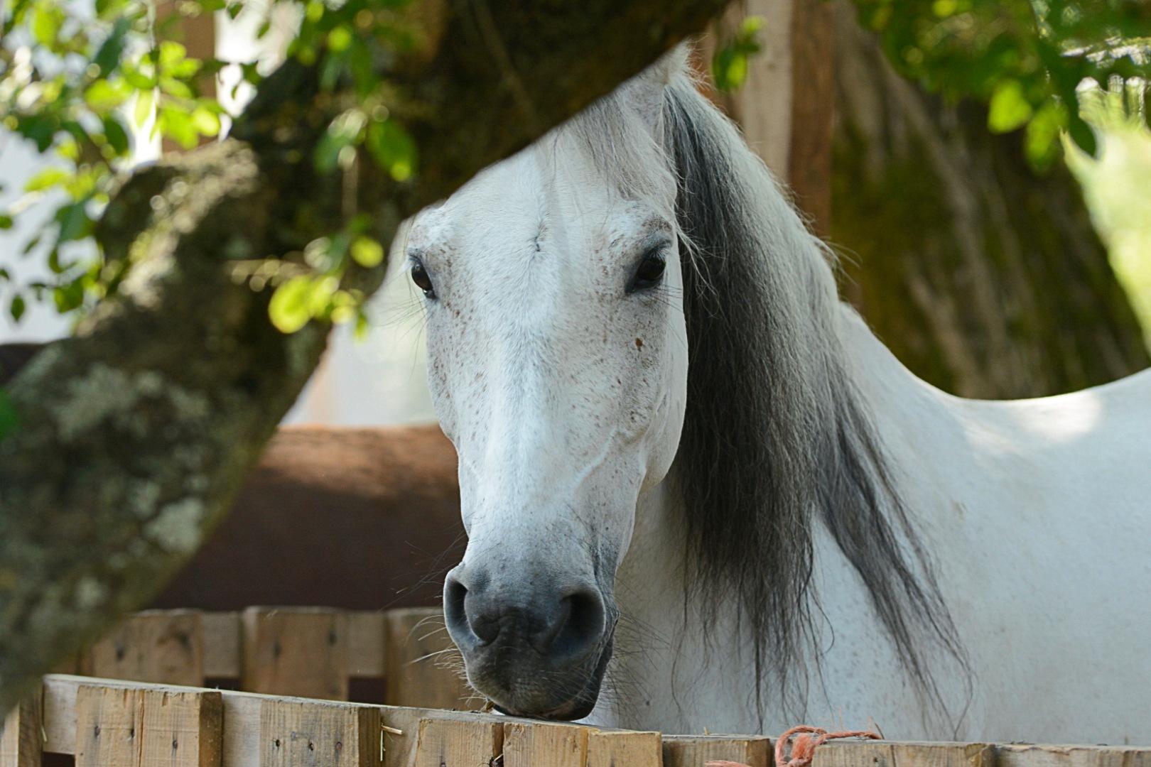 Horse by João Almeida