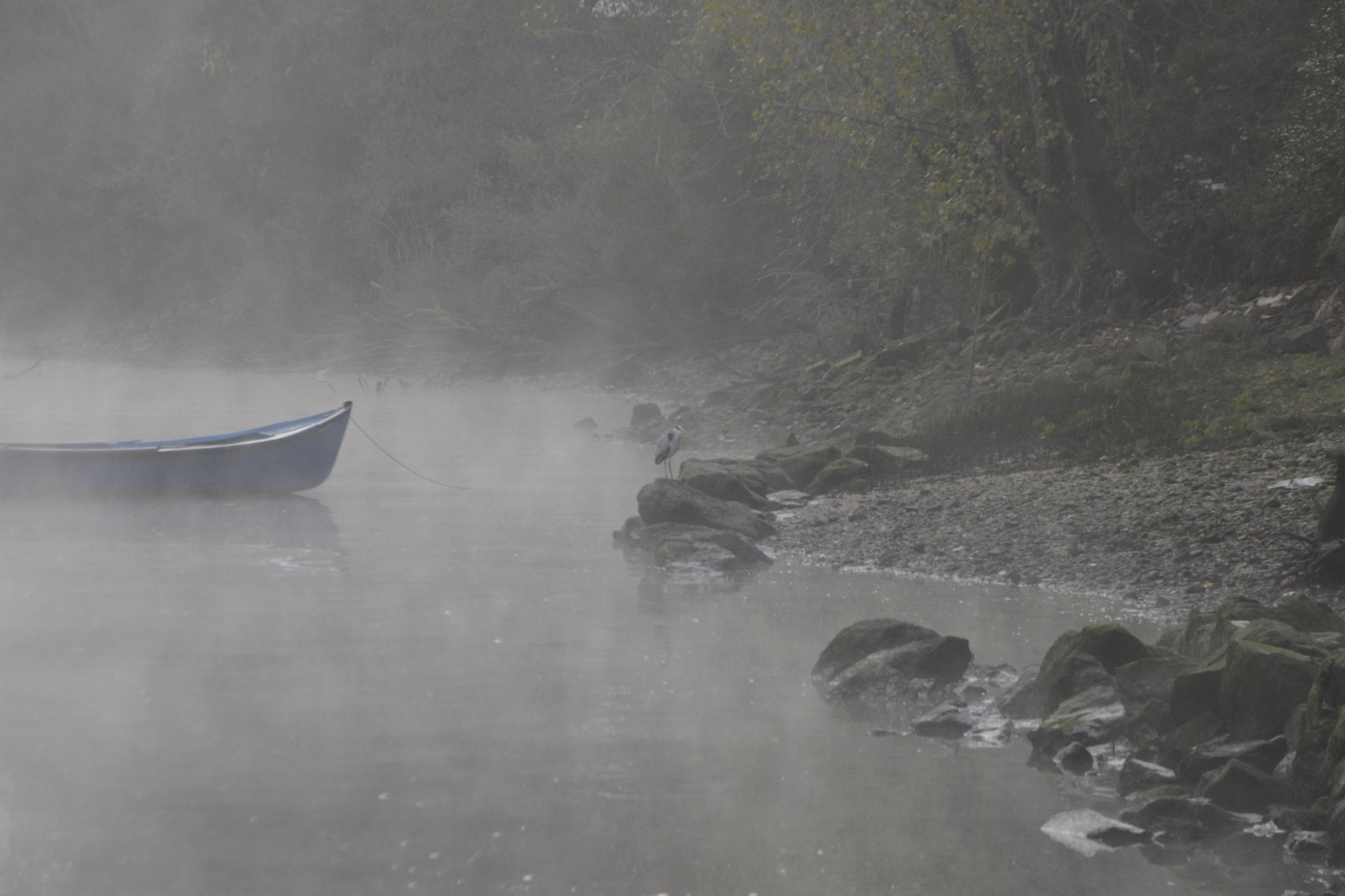 The mist and the heron by João Almeida