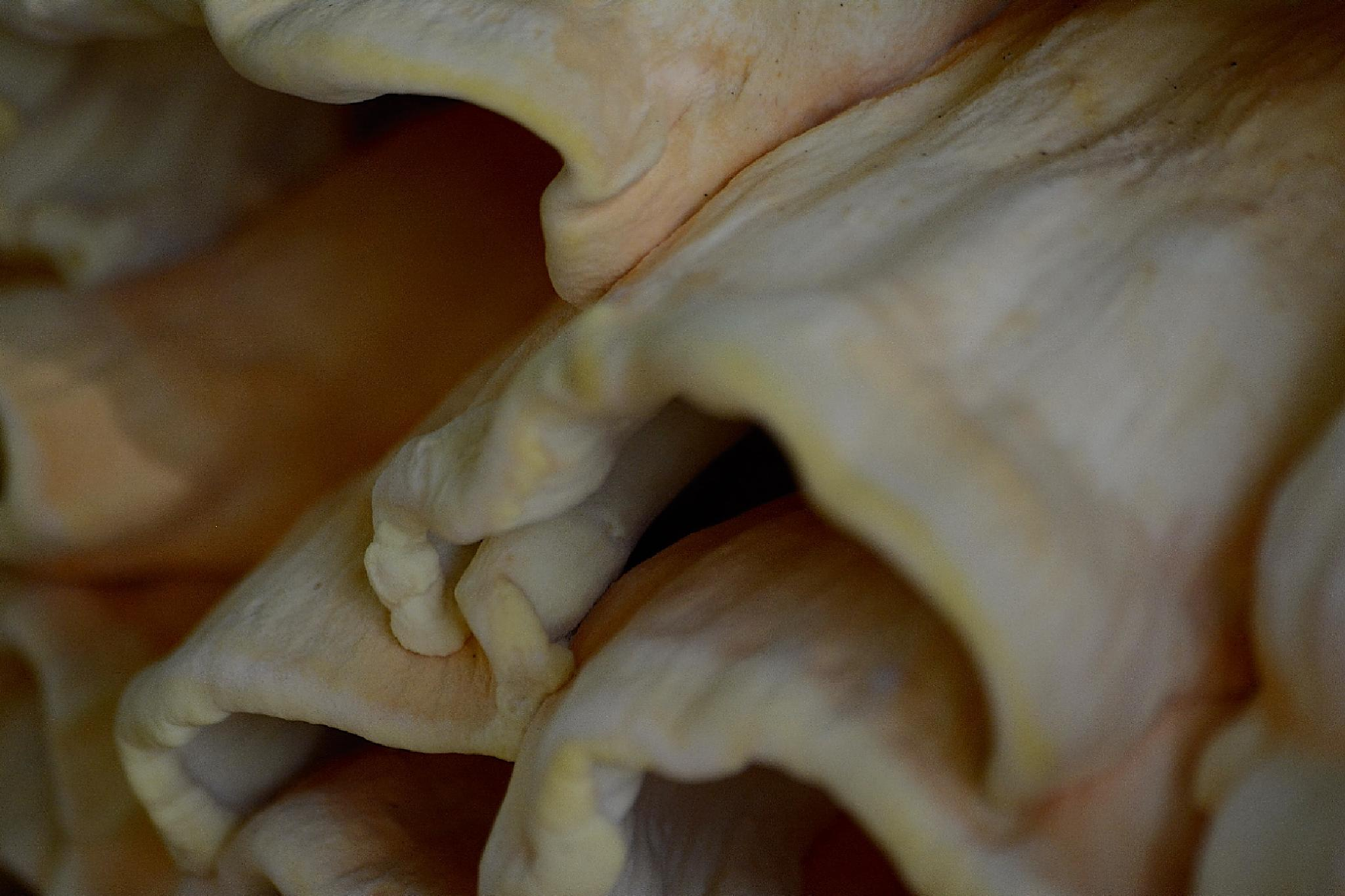 Fungi detail by João Almeida