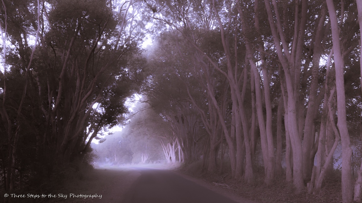 Photo in Abstract #trees #roadway #dream-like