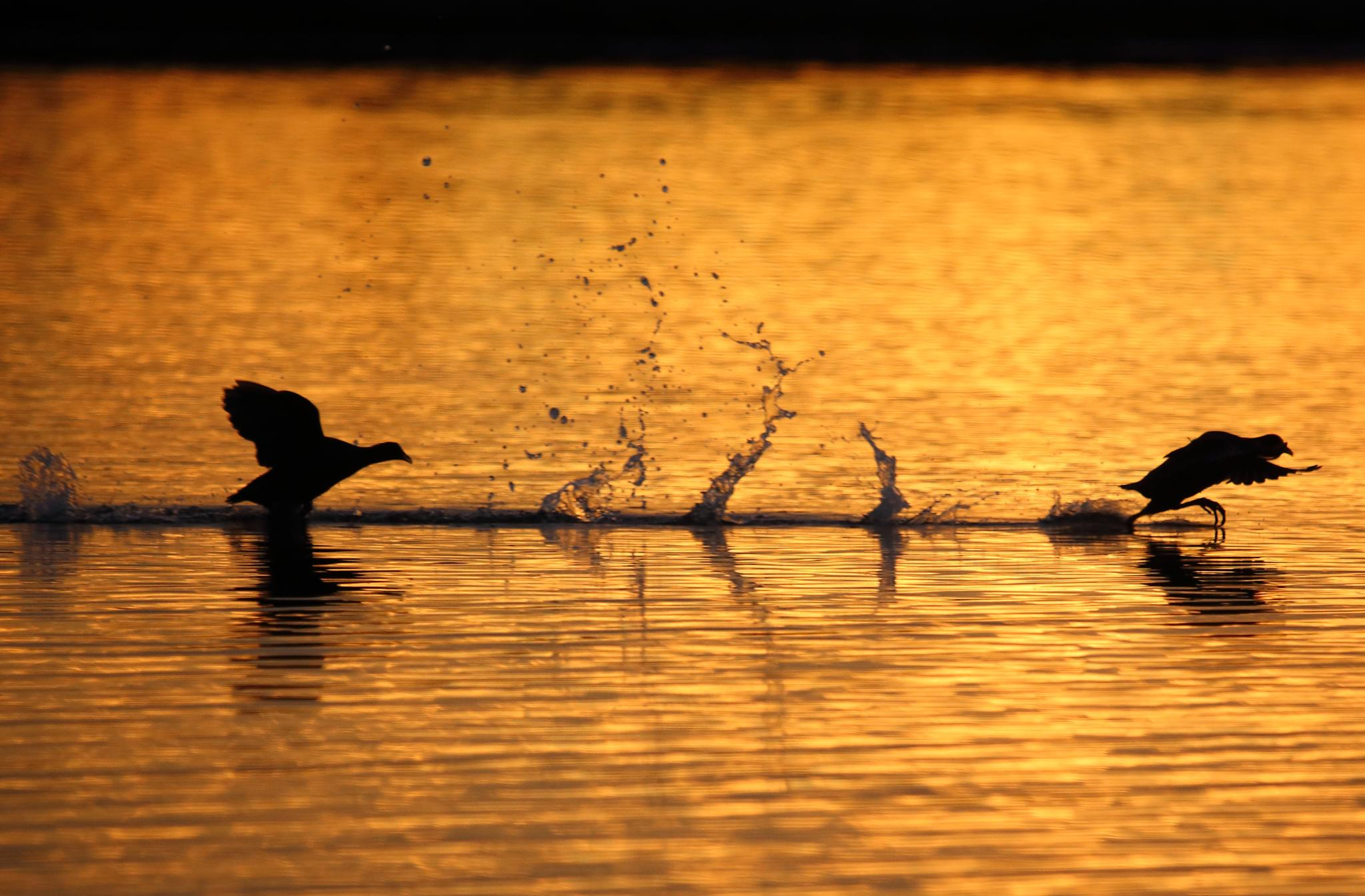 Sunset Chase by Sel Kerans