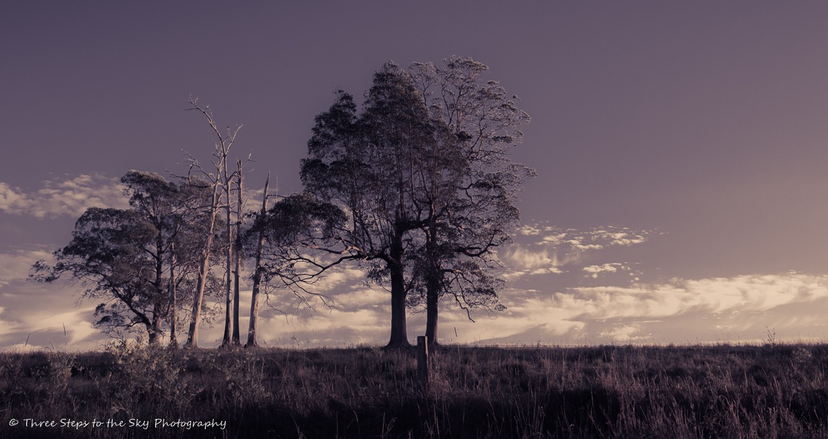 Taller by Sel Kerans