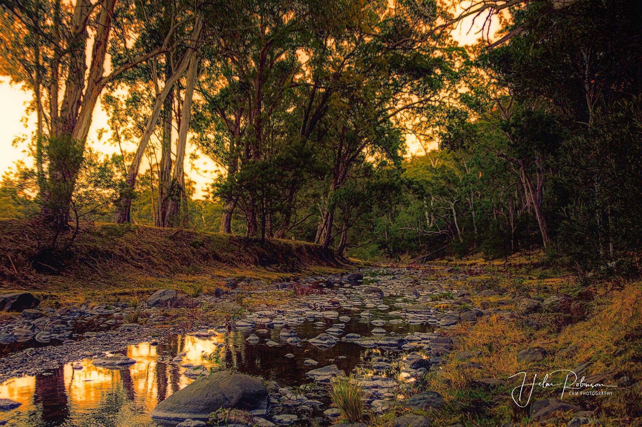 Dalrymple Creek by Helen Robinson