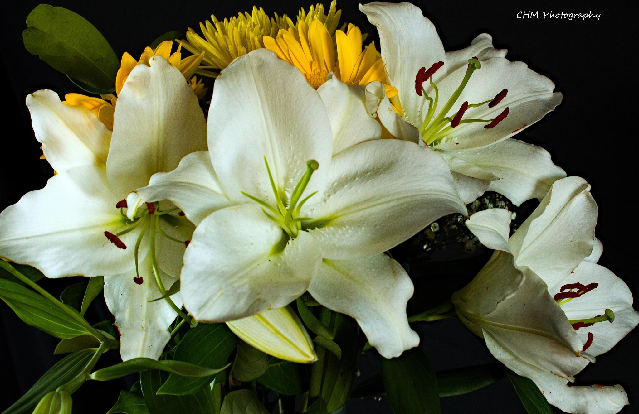 Ornamental Lillies by Helen Robinson