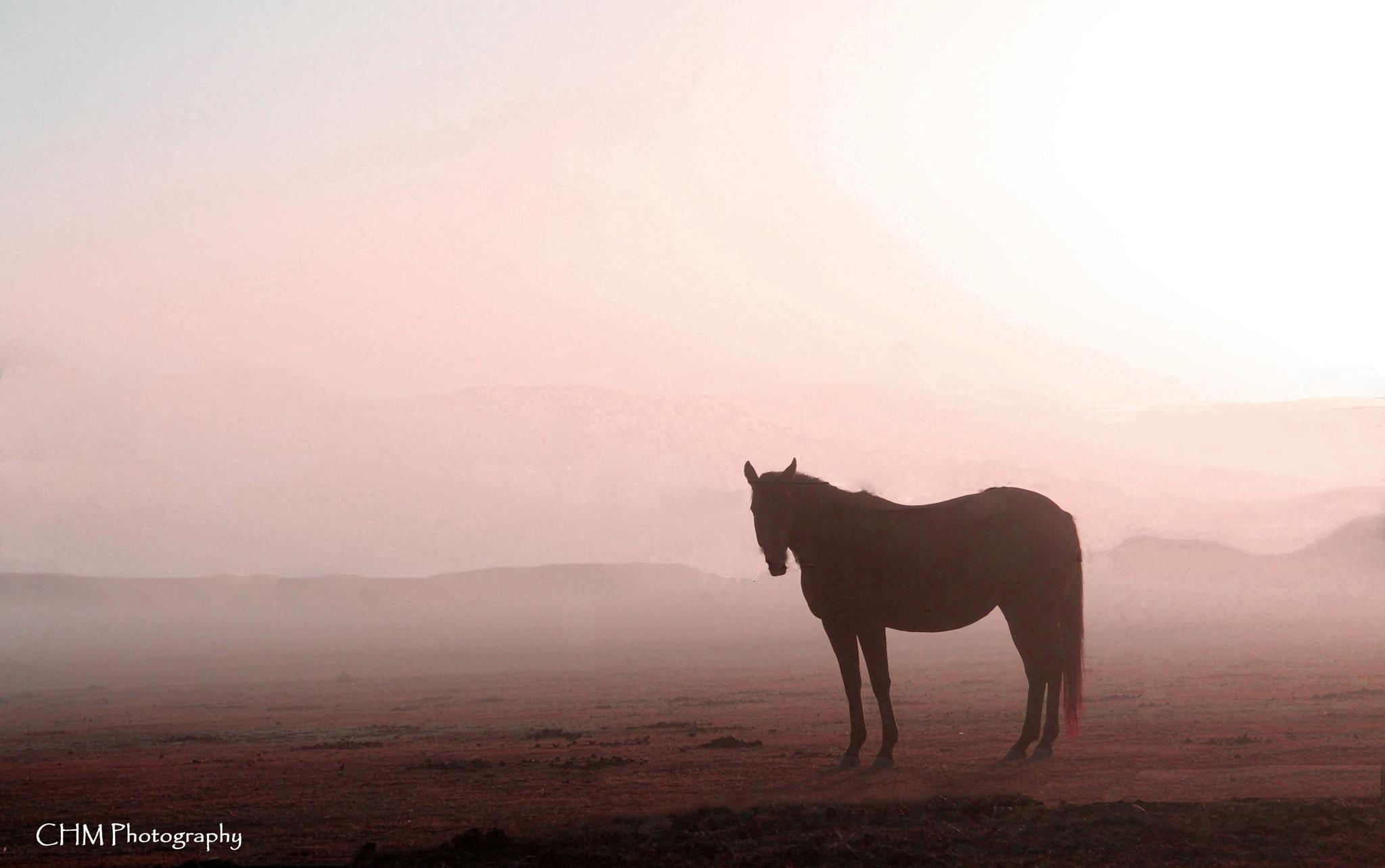Morning Mist - Clifton, Queensland by Helen Robinson