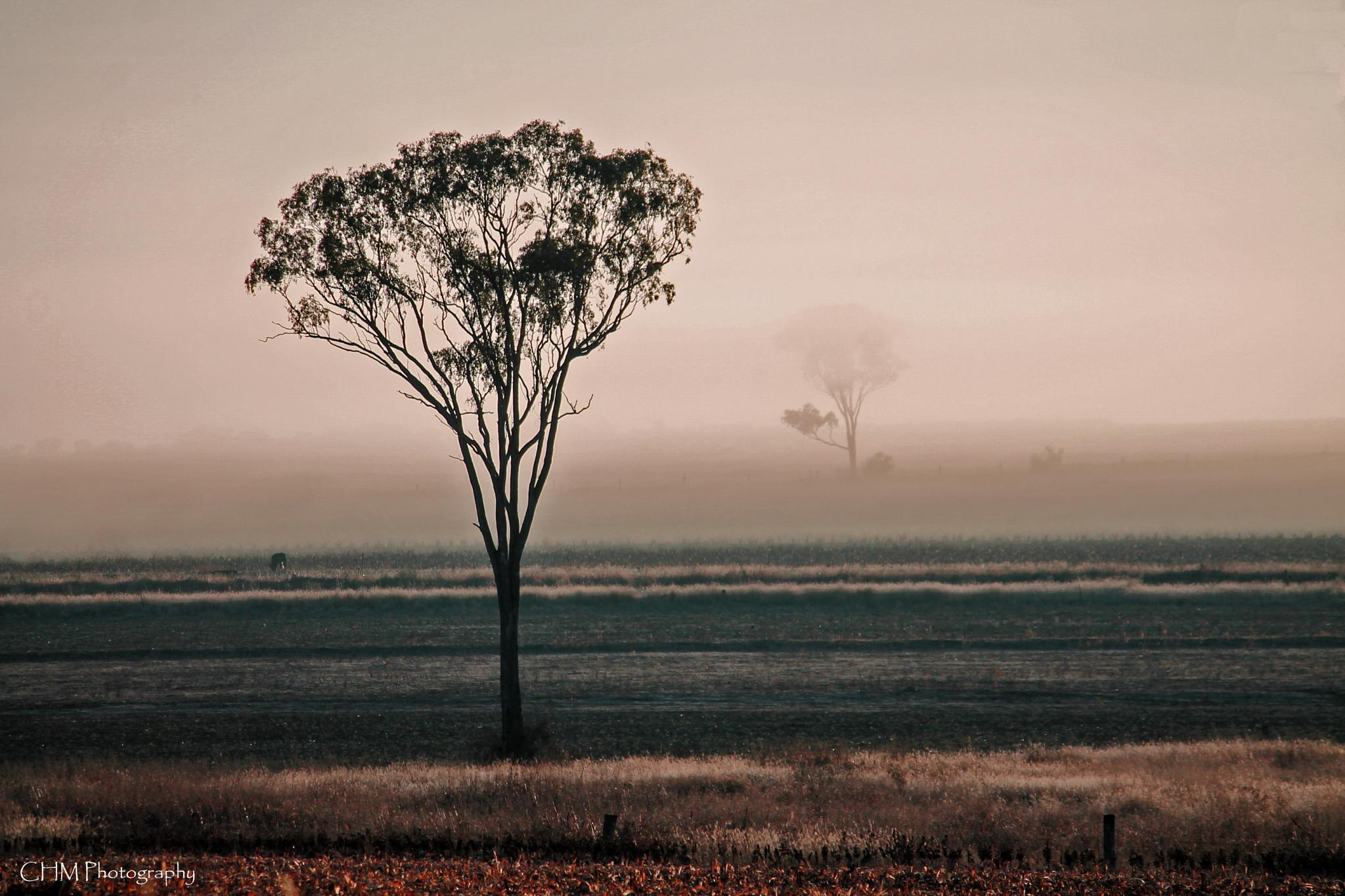 Morning in Victoria Hill, Queensland by Helen Robinson