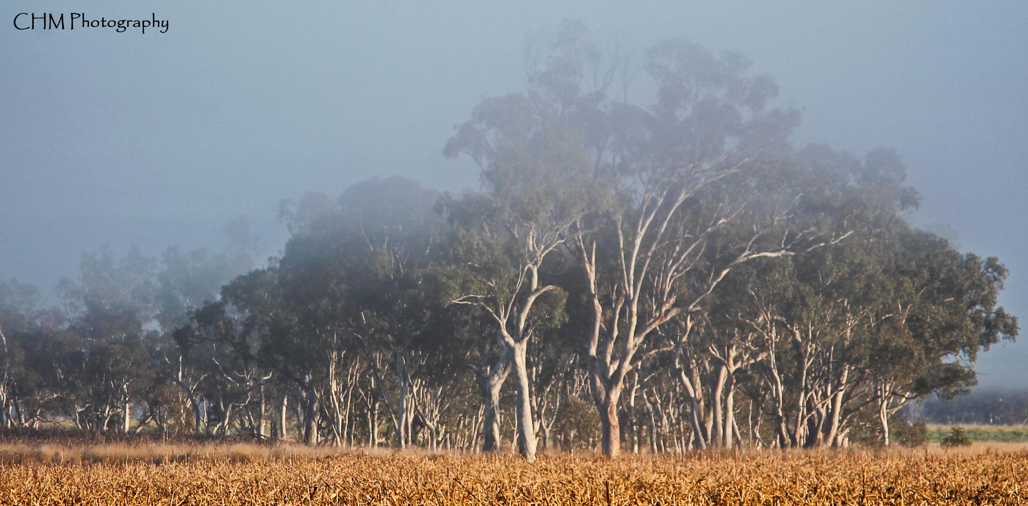 The Tree Paddock - Victoria Hill, Queensland by Helen Robinson