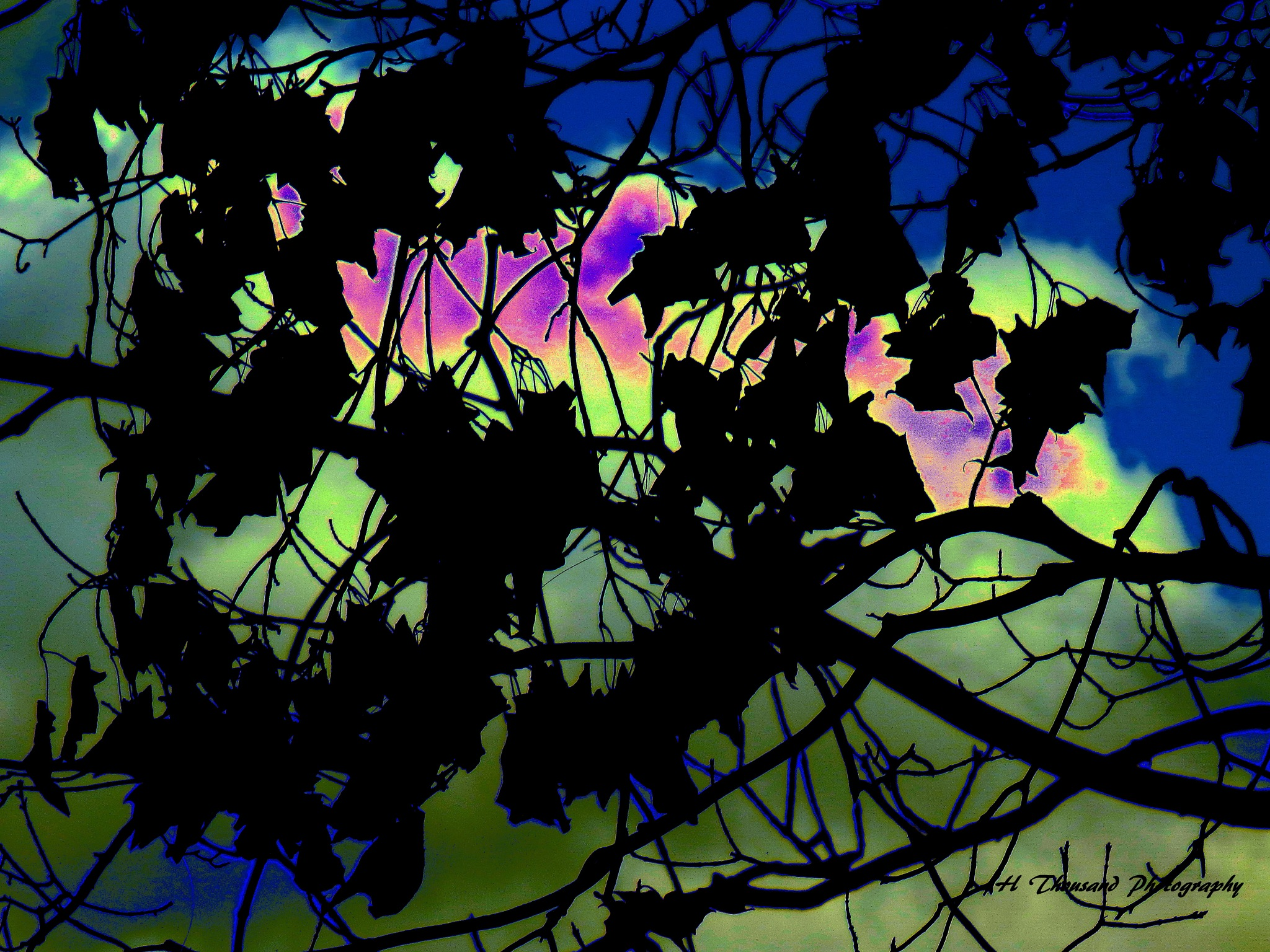 Tree and Leaves (abstract) by hrthousandjr