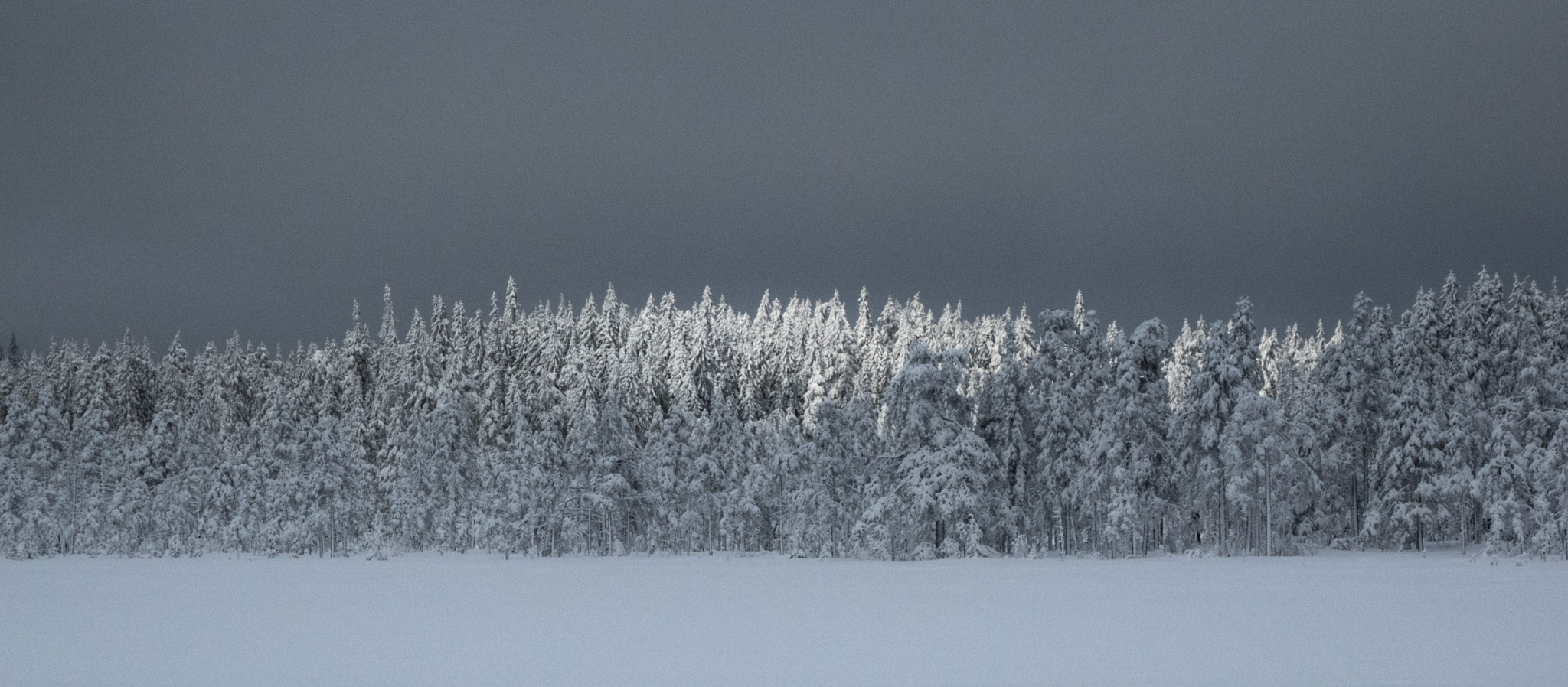 Winter comes to Sweden by hutchst