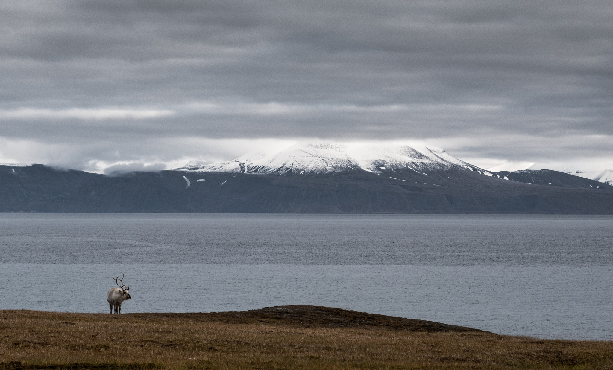 solo reindeer by fjord by hutchst