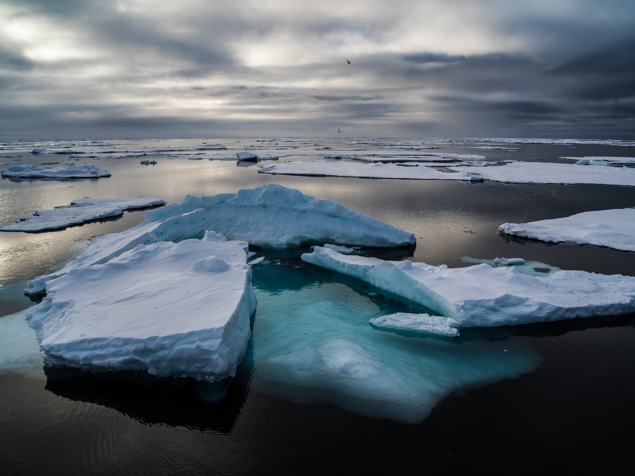 blue floes, arctic  by hutchst