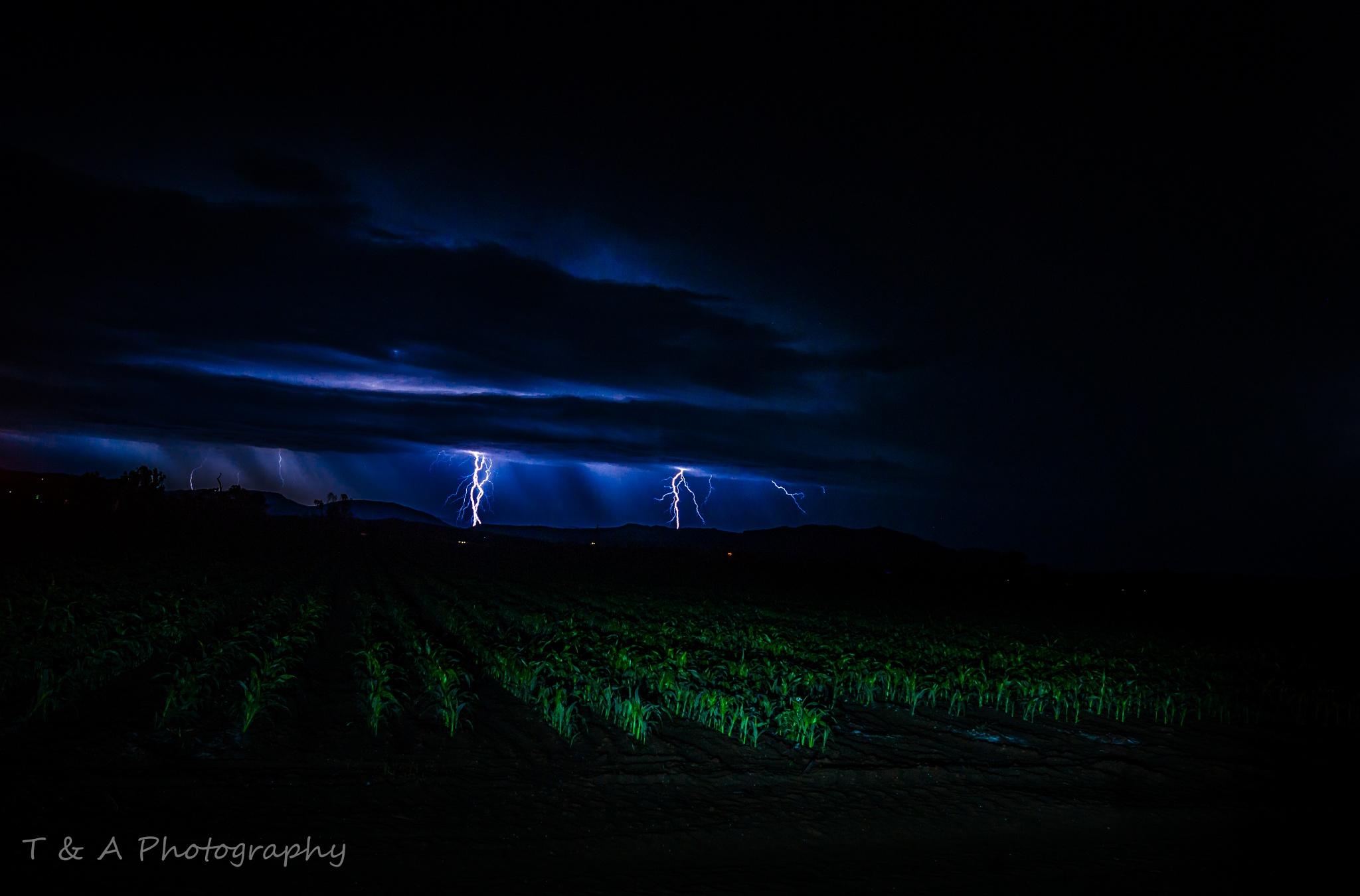 Lightning in the fields by Tim Murphy