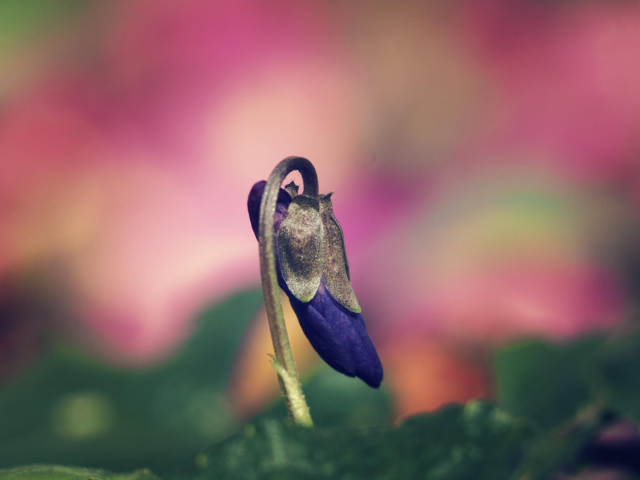 wild flower by alain michel