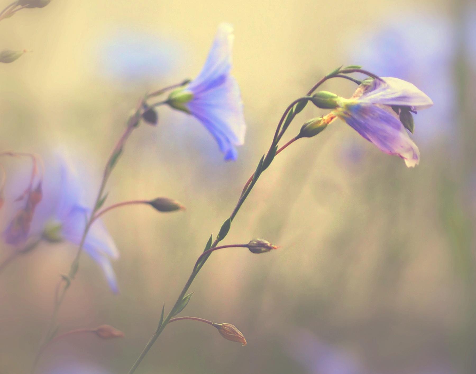little wild flowers  by alain michel
