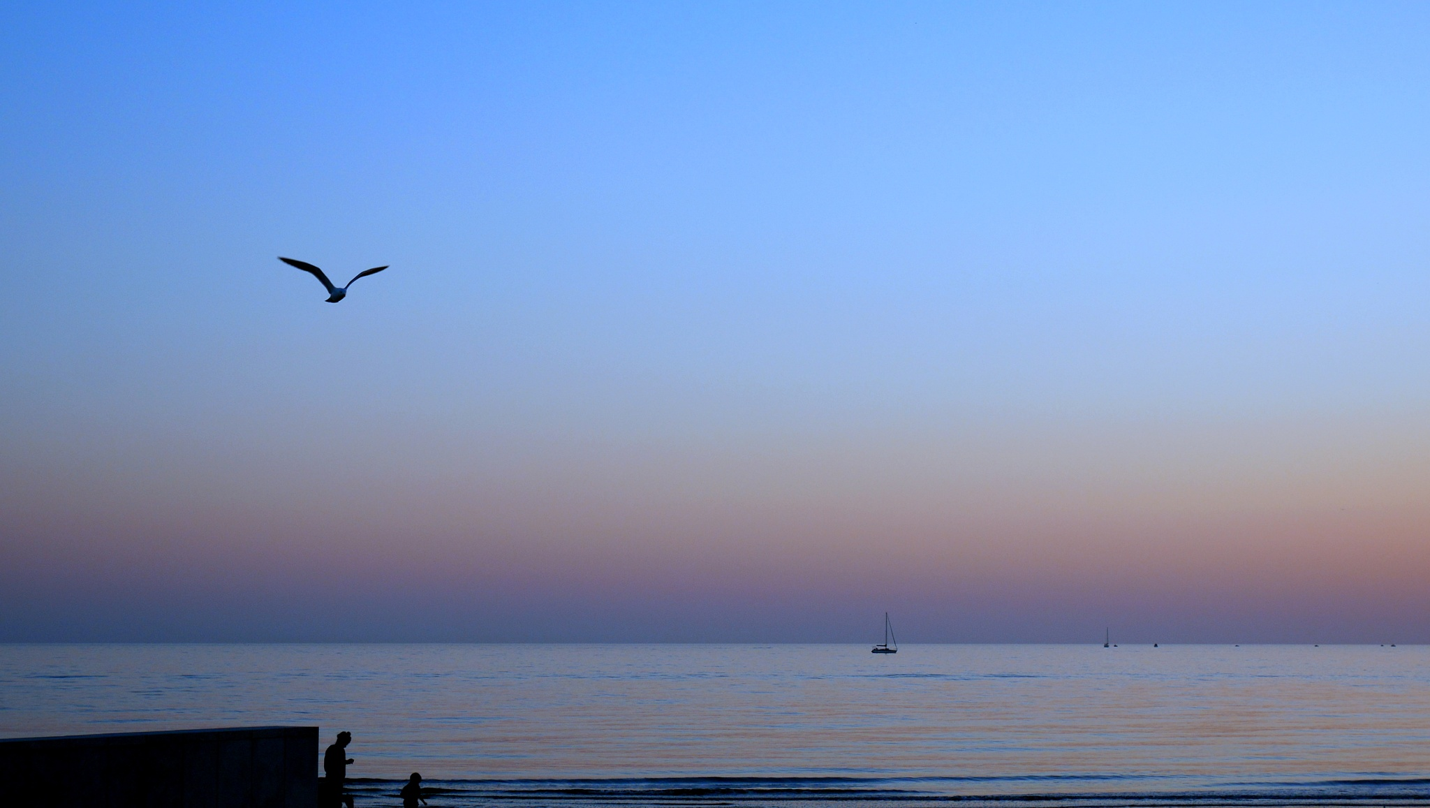 seagull by alain michel