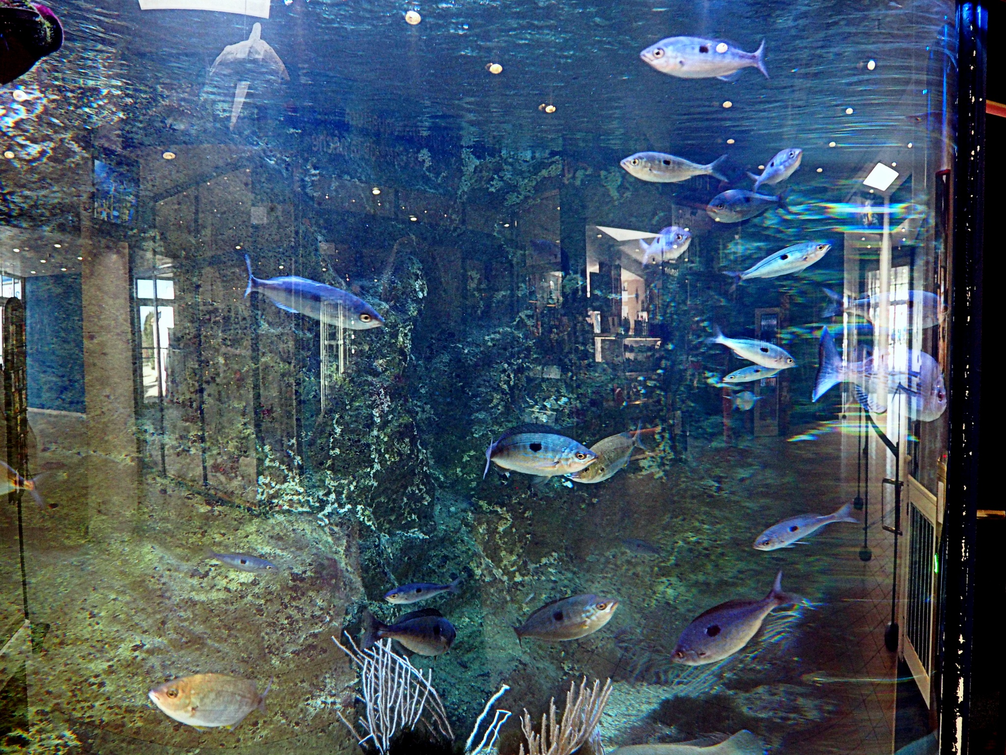 the fish hall by alain michel