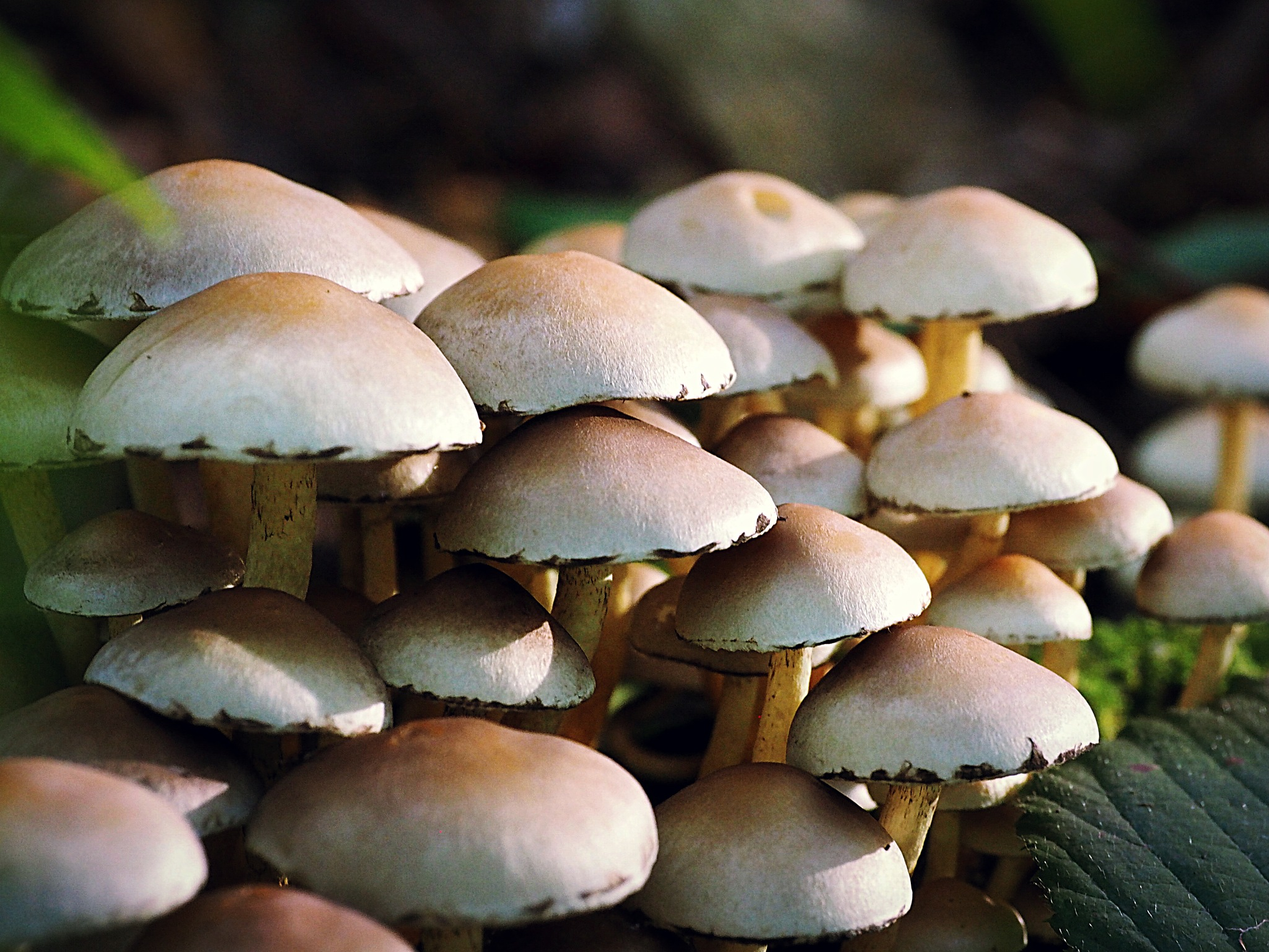 autumn mushrooms by alain michel