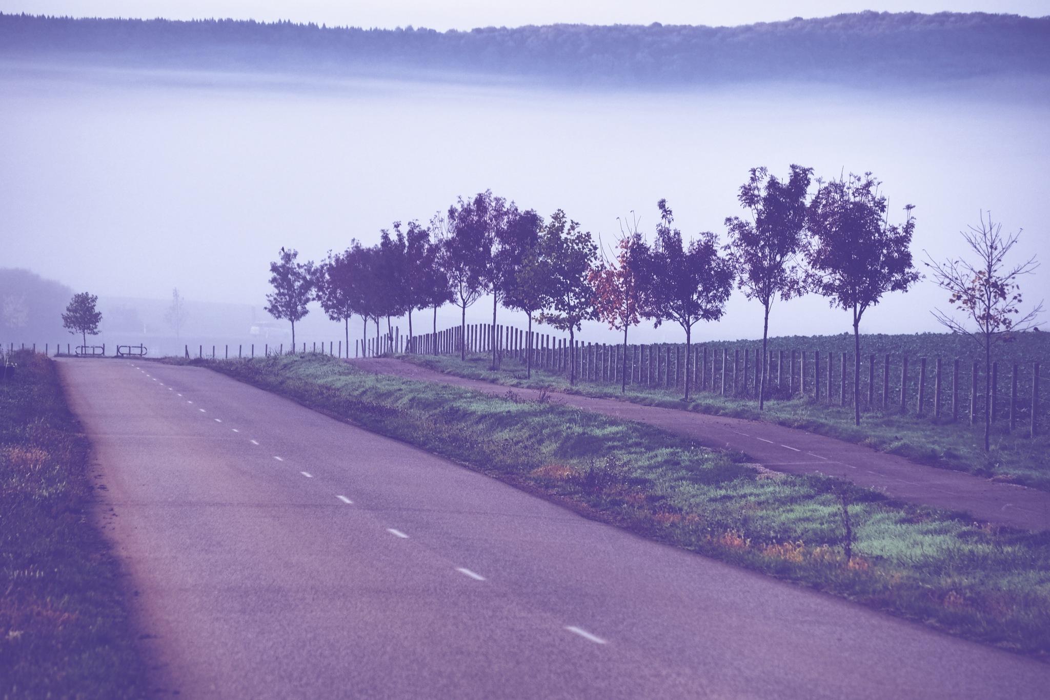 morning mist by alain michel