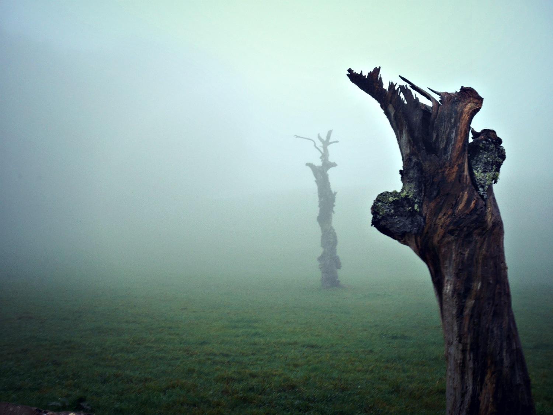dead trees by alain michel