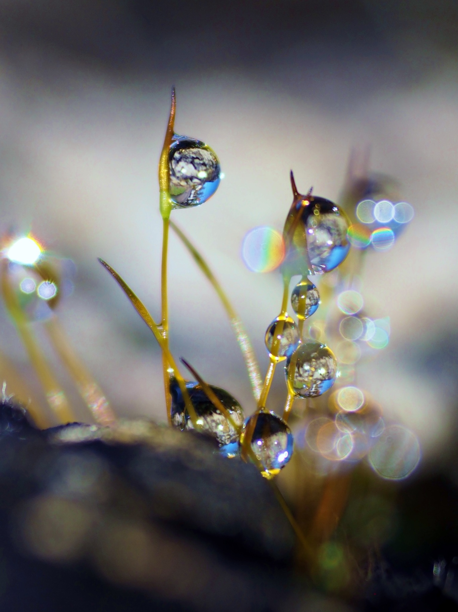 droplets  by alain michel