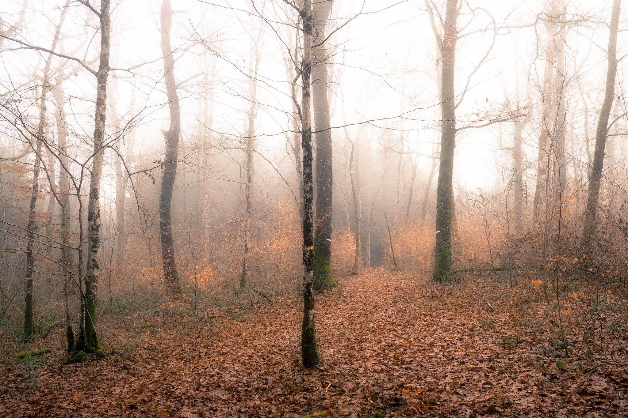 morning misty light by alain michel
