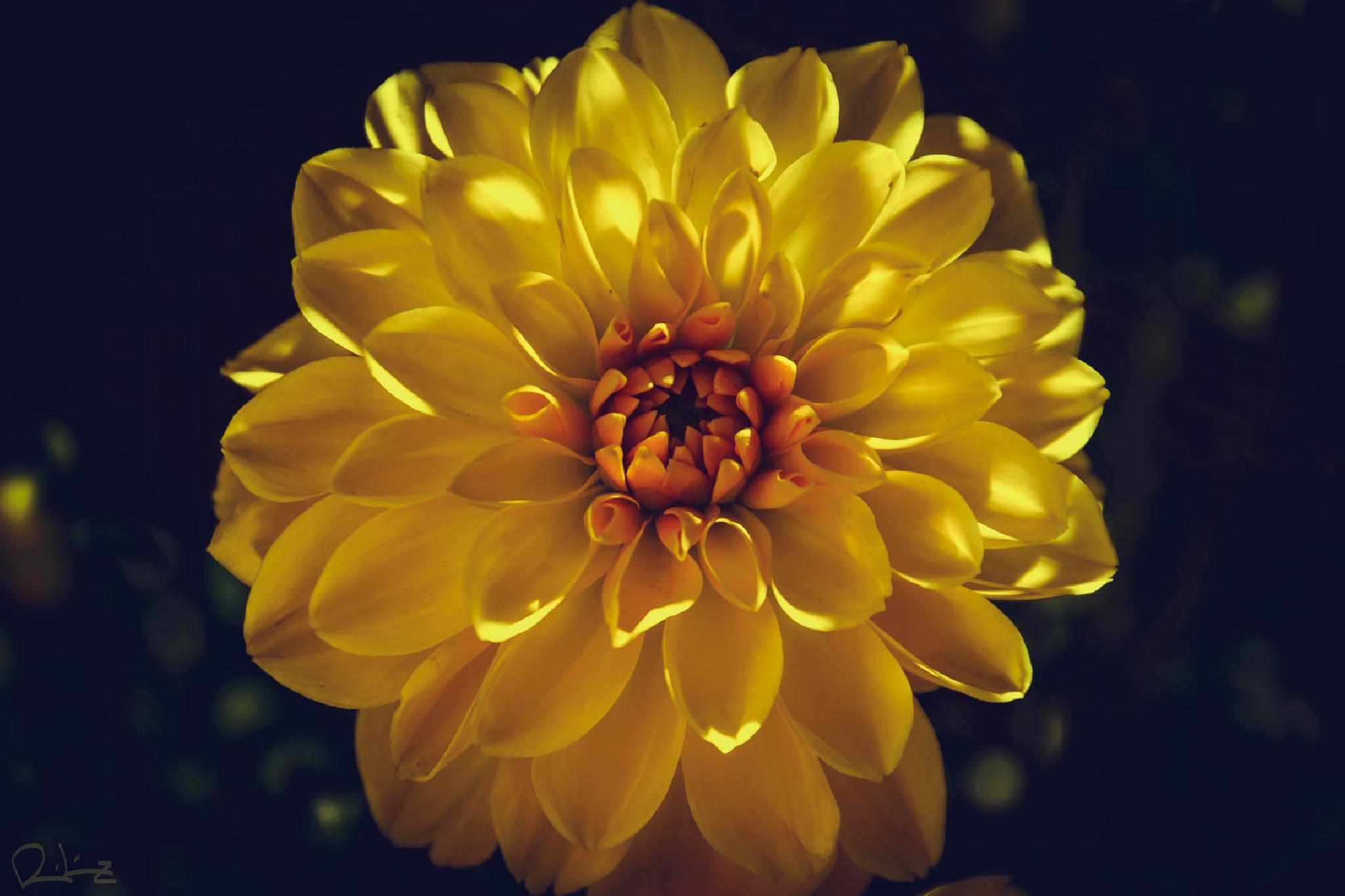 yellow by RubenLopezHidalgo