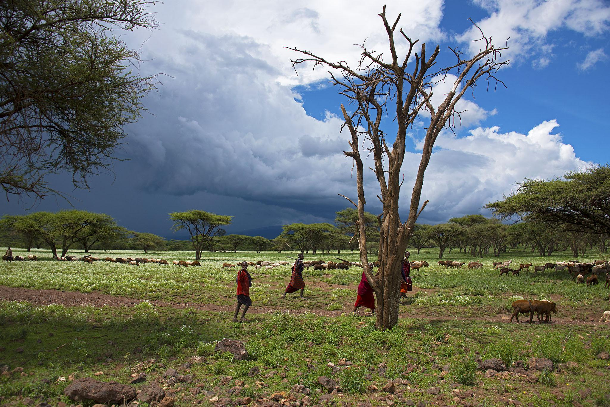 African landscape by Clive Finlayson