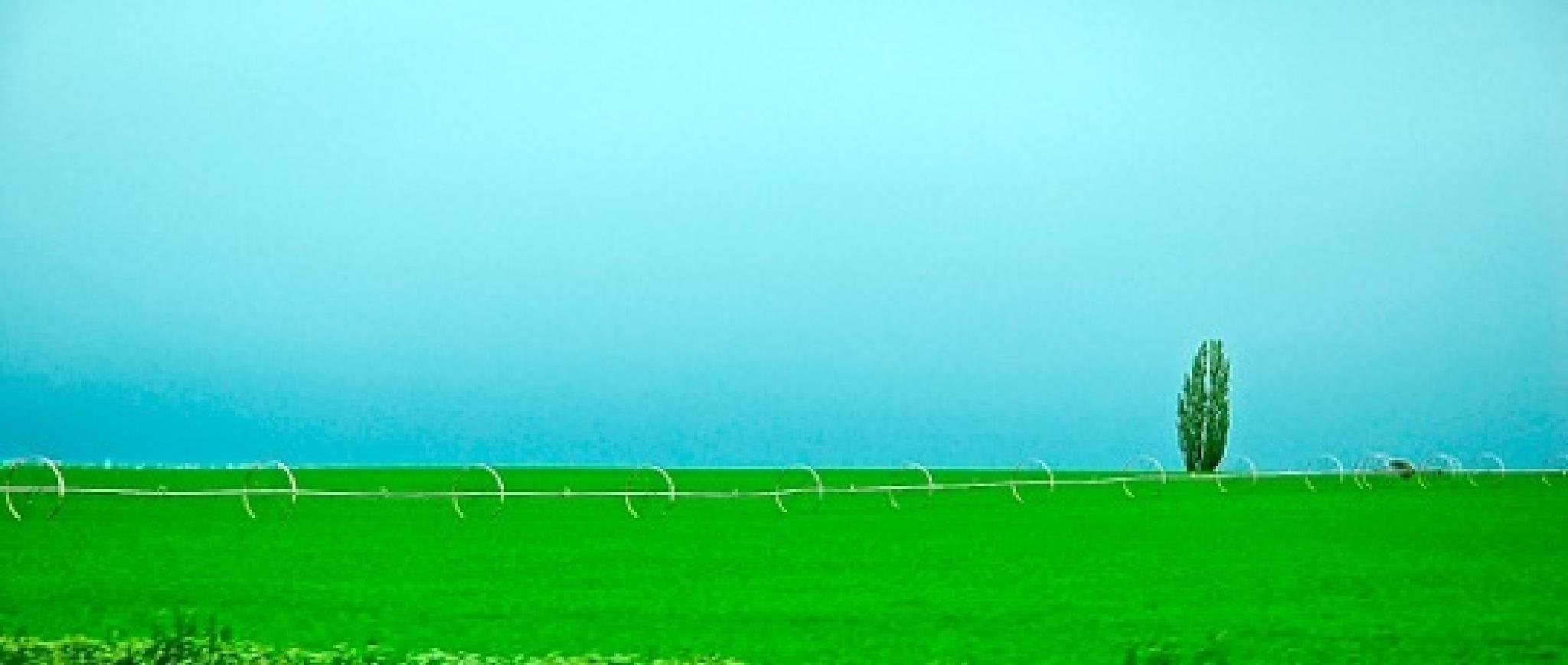 Green N Blue by Peke's Gallery