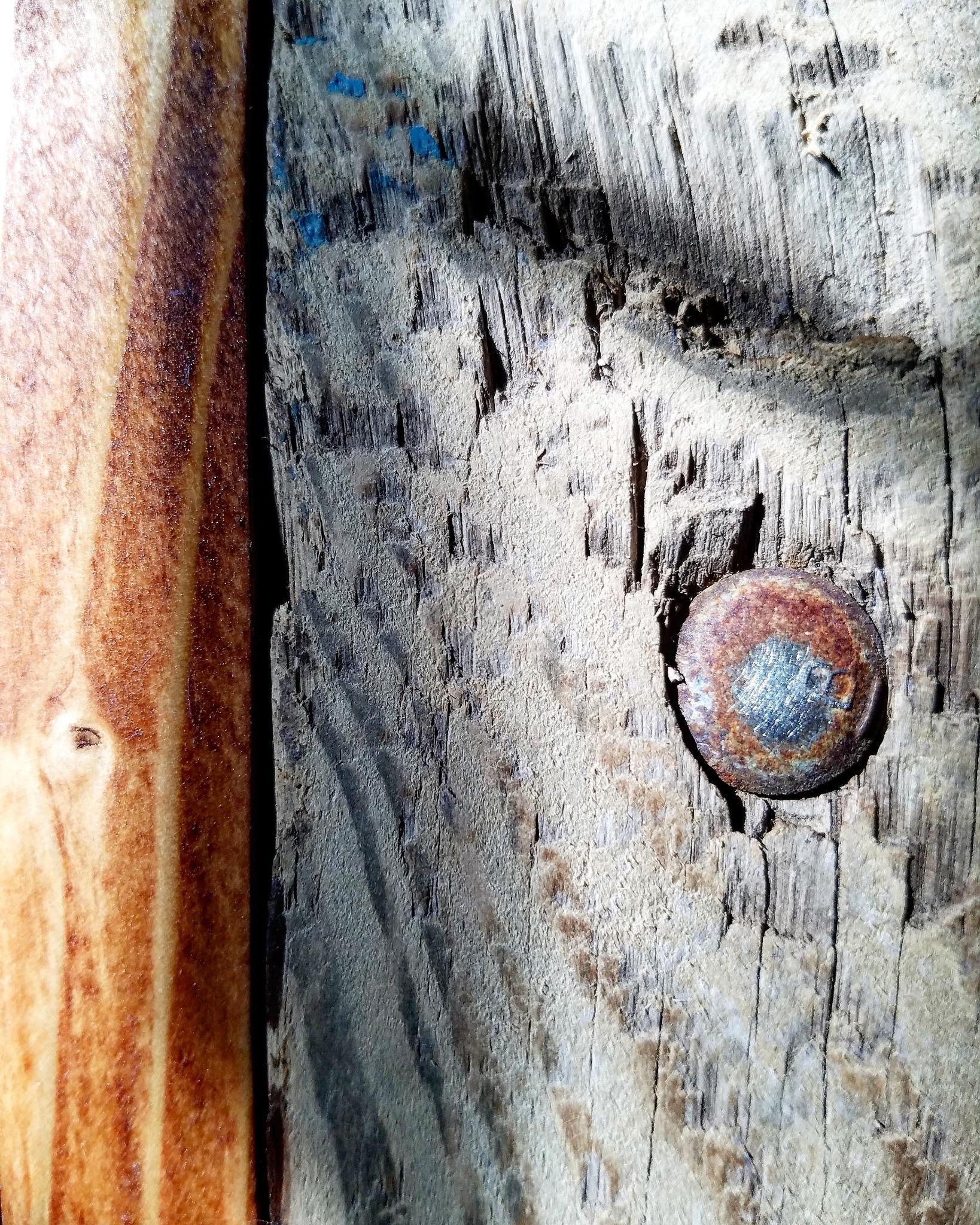Talking Wood by Peke's Gallery