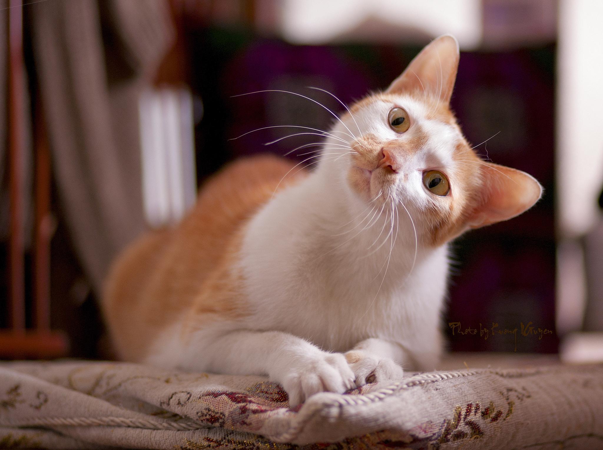 My pet by Kuong  Nguyen