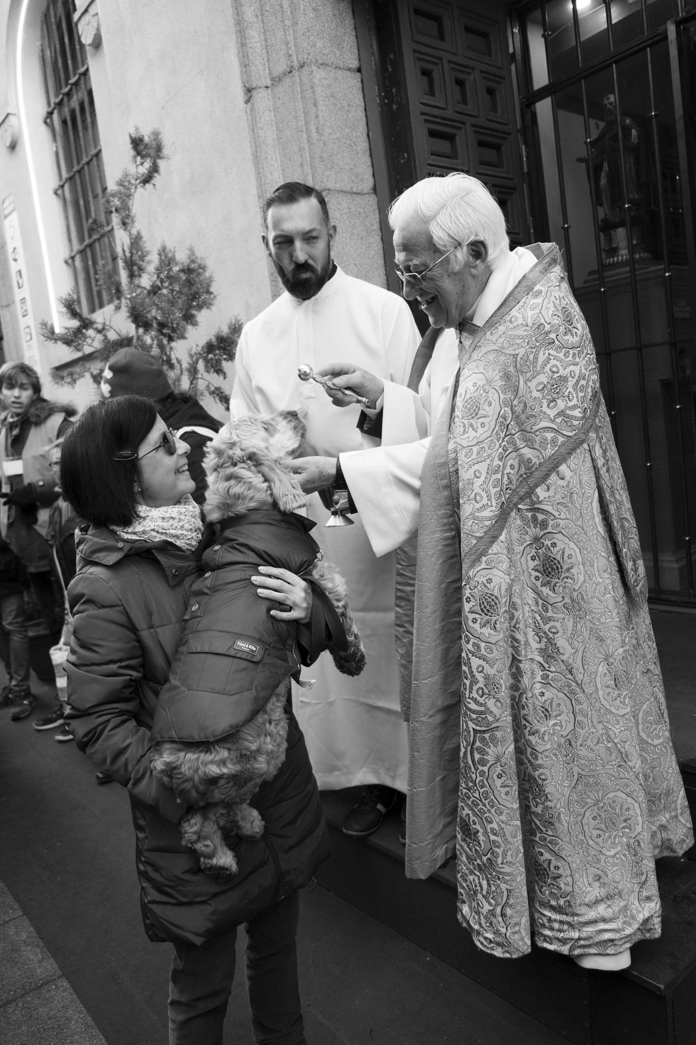 Saint Anton's day (Patron Saint of animals) by juliandelnogal