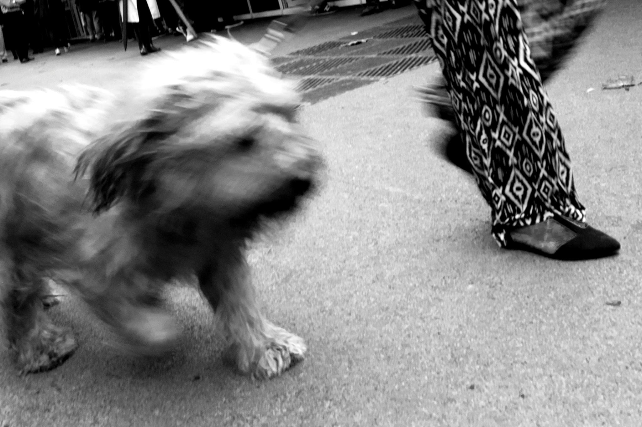 Running the dog (2) by juliandelnogal