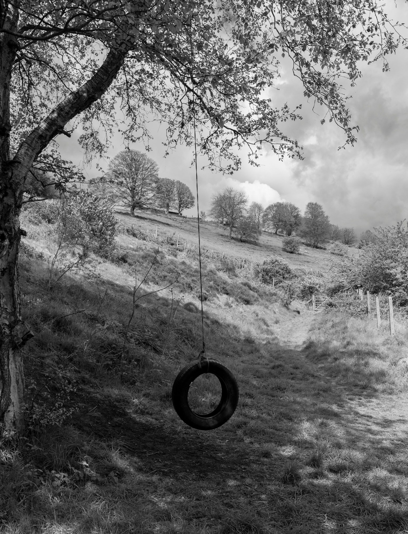 Tyre swing by lindans