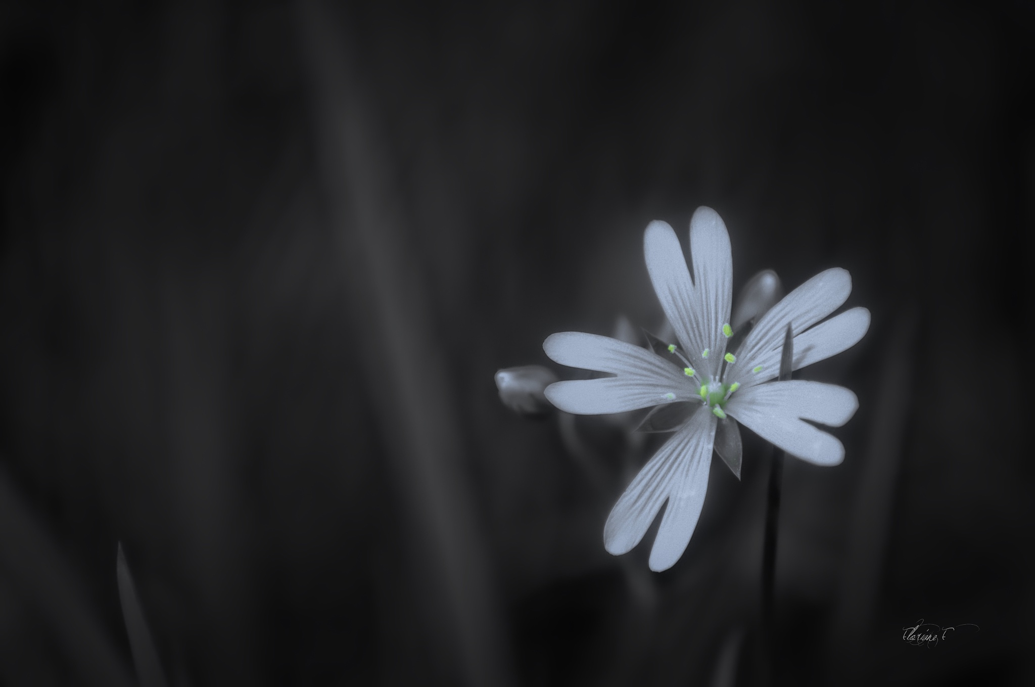 a light in the darkness by Floriane F. Photos