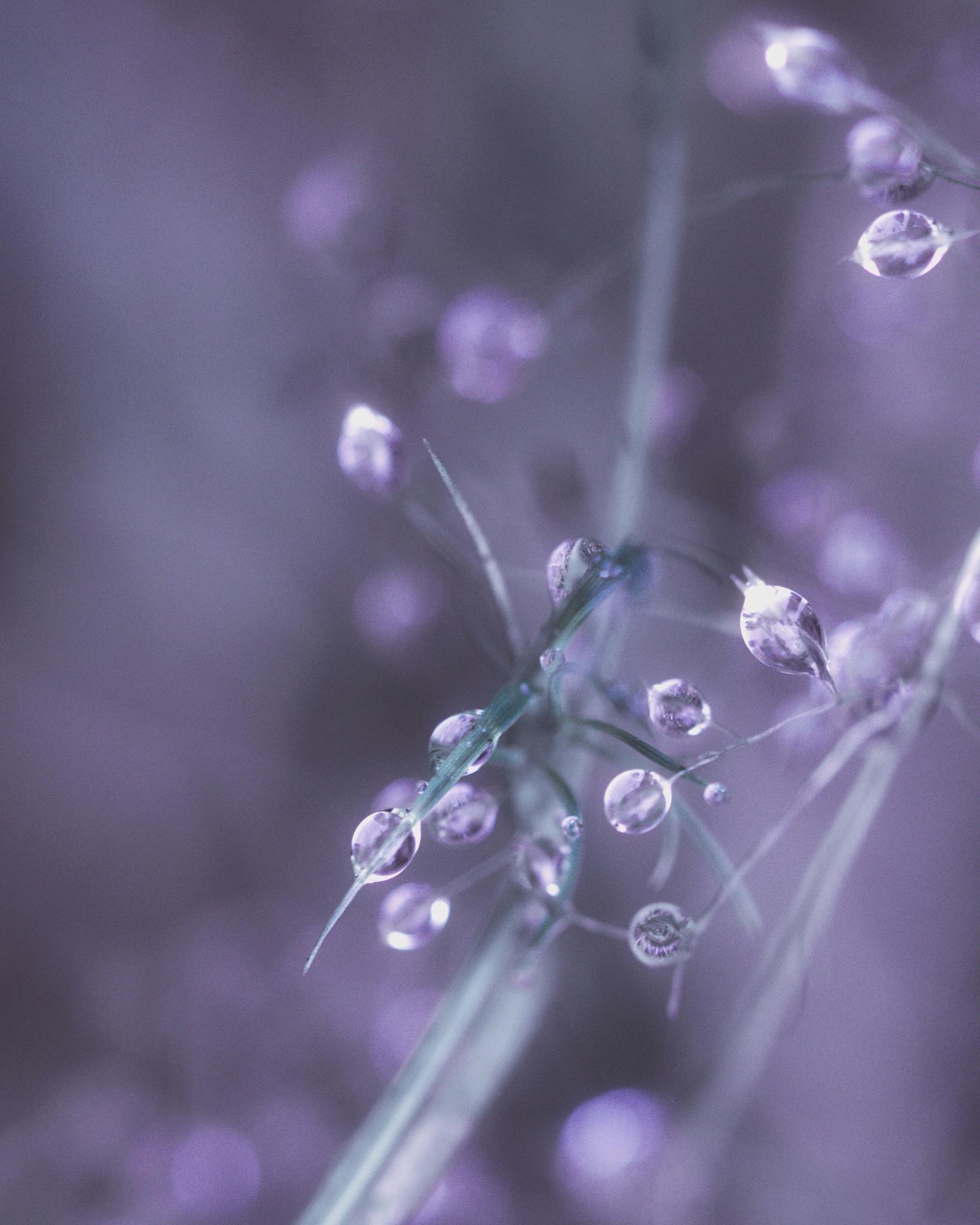 Mes perles de cristal  by Floriane F. Photos