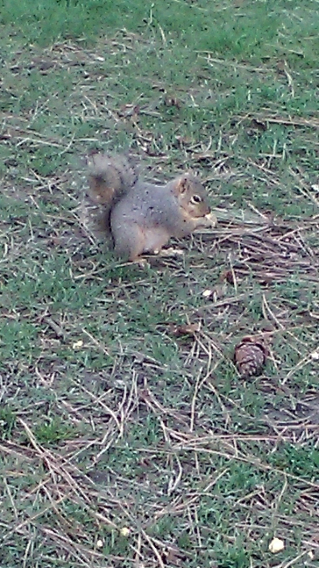 Looking for pine nuts by Keri E. Carter
