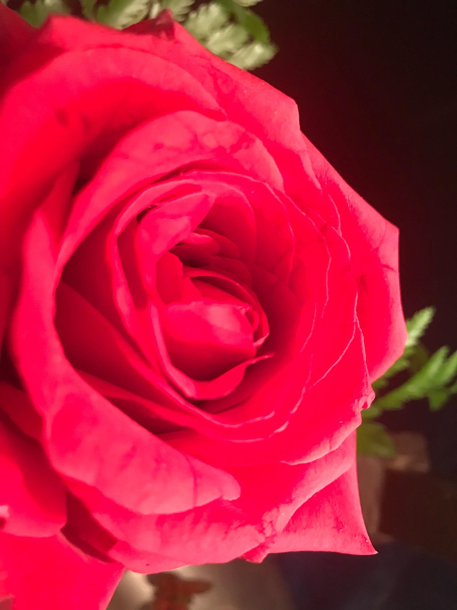 The Rose by Keri E. Carter