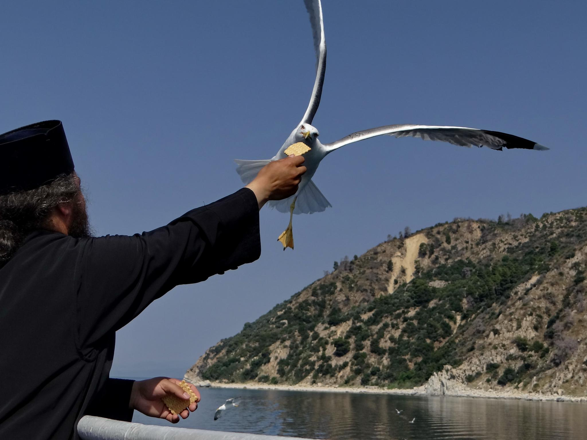 Monk and a seagull by Alekdandar Dekanski
