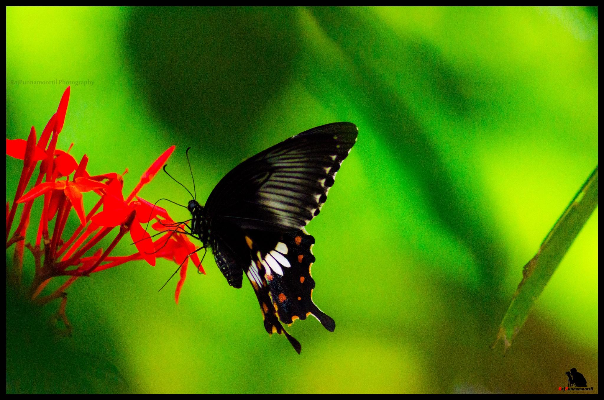 RajPunnamoottil Photography by Raj Punnamoottil